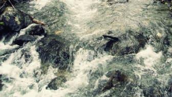 Kvoten för vildlax i Bottenviken nästan uppfiskad - nu inför HaV fiskeförbud