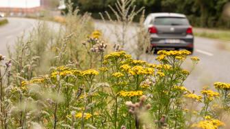Ny støjsvag asfalt og plads til biodiversitet