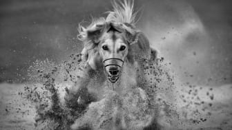 © Muriel Vekemans, Belgium, Shortlist, Open competition, Motion, 2020 Sony World Photography Awards