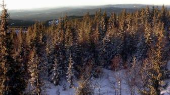 Effektene skogsintensivering har på vannkvalitet er fokus i et nytt forskningsprosjekt hos NIVA. (Illustrasjonsfoto: Wikimedia Commons)