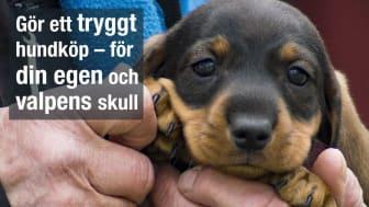 Se upp för olagligt införda hundvalpar