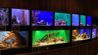 Museum kipper ekstra med Dannebrog