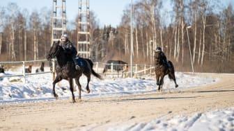 Monté på Axevalla Hästcentrum. Foto: Västra Götalandsregionen.