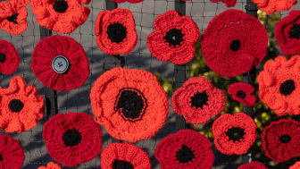 Go North East launches appeal for volunteers to knit or make poppies