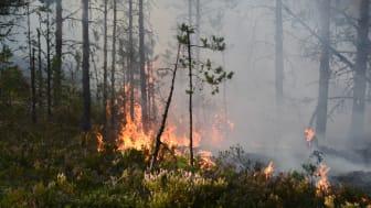 När skogsbränder riskerar att bli vanligare behöver samhället ha bättre planer för att möta klimatförändringar.
