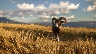 2CC-Mouflon_sheep_1920x1080.png