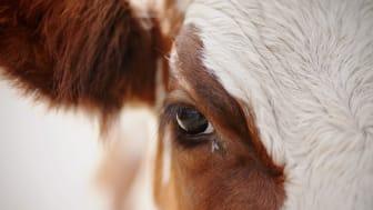 Hva betyr dyrehold for utviklingen av nye virus og epidemier?