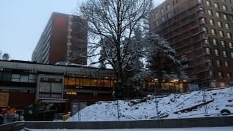 Pressefotografering av massivtre-prosjektet på Kringsjå Studentby. Foto: Unni Irmelin Kvam