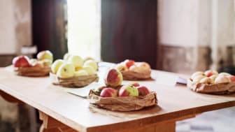 Vilken sort är dina egna äpplen? Ta med max 5 äpplen och fråga pomologen Görel Kristina Näslund på Skoklosters slotts äppeldag 16 september.