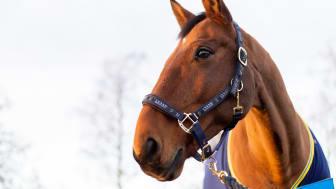 Årets ridskolehäst - Quinn. Foto: Svenska Ridsportförbundet