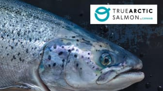 True Arctic salmon is raised north of the Arctic Circle, where the water is cold and the salmon grows slower, resulting in specific product qualities.