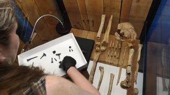 Konservator Unn Gelting i aktion i 2020 under forberedelserne af spotudstillingen 'Skelettet i kongehallen – Hvem var han?', som nu forlænges. Foto: ROMU