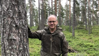 Skogsbild ståendes bredvid tall Peter Calderon 5.JPG