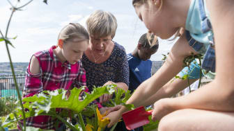 Prof. Greta Defeyter with children growing vegetables in an allotment at Bridgewater Primary School holiday club
