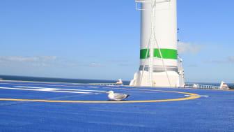 Rotor sail seagull