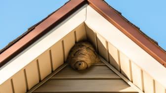 Ein Insektennest sieht ganz unauffällig aus, meist ist das Zusammenleben von Tier und Mensch aber nicht friedlich und das Nest sollte artenschutzgerecht entfernt werden.