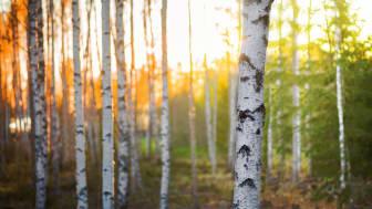 Kommuninvest raises SEK 5 billion in new Green Bond