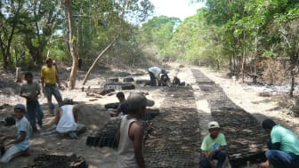 Trädplanteringsprojekt i Nicaragua