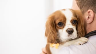 8 saker att tänka på inför veterinärbesök