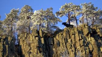 Platåbergens Geopark där Halle- och Hunneberg ingår kan bli godkända som Sveriges första Unesco globala geopark.