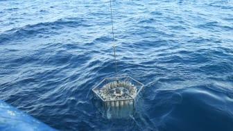 Prover tas ur Svarta havet för att isolera dna från DPANN-arkéer. Foto: Nina Dombrowski