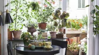 Stämmer det att man mår bättre av att omges av växter? Foto: Anna Skoog