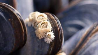 Havstulpaner växer till under sommaren men går att tvätta bort när de är små.
