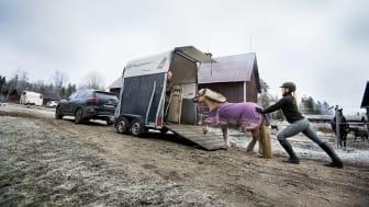 Egen hästtransport ger trygghet och utveckling