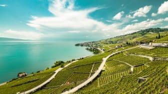 Das Weingebiet Lavaux © Maude Rion