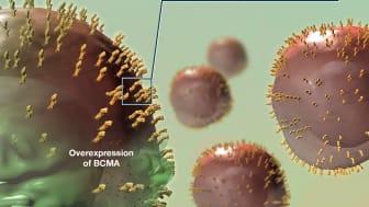 AMG 701 är en BiTE-molekyl med förlängd halveringstid som binder till dels B-cellmognadsantigen, BCMA, på myelomceller, dels CD3 på T-celler.