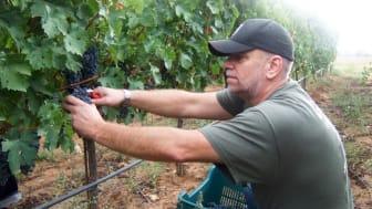 Den nya vinmakarutbildningen inleds med en resa till Toscana i skördetid.