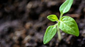 EU indfører strammere regler for indførsel af planter