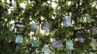 """I det kungliga vinhuset visas besökarnas bilder av Sofiero på temat """"Nya upptäckter varje gång"""". Foto: Johanna Kärnstrand"""
