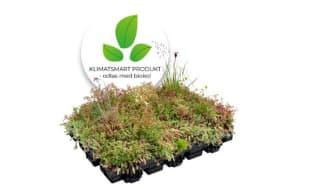 Veg Techs allt- i- ett modul Hydropack® Sedum-ört-gräs odlas med biokol.