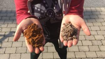 Forskningsledaren Anna Rosling med jord från Ivantjärnheden. Till vänster i den magrare och rödare jorden trivs Archaeorhizomyces secundus och i den mullrikare jorden till höger dominerar Archaeorhizomyces victor. Foto: Veera Tuovinen