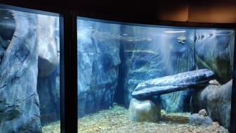 Akvarium med miljöer från Blåbergsholmen