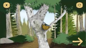 Skogsmulle & naturboken /fågeln