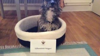 Välkommen Holger - på Åkeshofs Slott är alla fyrfotade vänner välkomna
