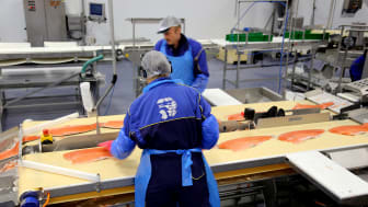 Continued increase of salmon exports