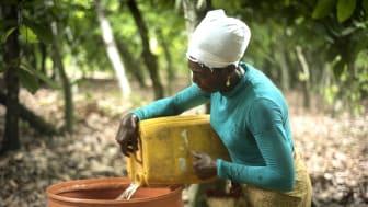 För Beatrice Boakye, Fairtrade-certifierad kakaoodlare i Ghana, är klimatförändringarna en stor utmaning. Foto: Kate Fishpool