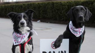 En grupp hundar samlades utanför FN:s högkvarter för att delta i kampanjen mot djurförsök under onsdagen 24 januari I New York. Andrew Kelly/AP Images for The Body Shop.