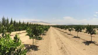 Analytiker uppskattar en kraftigt ökad global efterfrågan på mikronäringsämnen som tillverkas i Kvarntorp på grund av bland annat befolkningstillväxt och växande globala problem med vattenbrist i många regioner.