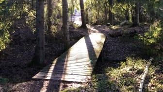 En av de fem broar längs Molkomsmossens vandringsled som ska bytas ut och tillgänglighetsanpassas.