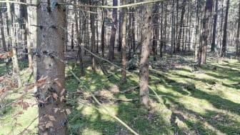 Die Rolle des Energieholzes in der Bioökonomie und der Kaskadennutzung ist der Themenschwerpunkt des 17. Brandenburger Energieholztages (Bild: Mike Lange)