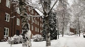 Bli med på visning på Sogn Studentby tirsdag 23. januar. (Foto: Astri Åmellom Brøto / SiO)