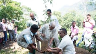 Merrill J Fernando återplanterar växtligheten vid Endana.