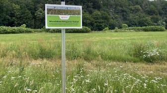 Aktionen für mehr Artenvielfalt an Veolia Standorten / Veolia Stiftung unterstützt weiterhin das Projekt Bunte Biomasse