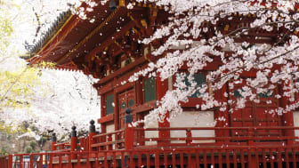 The Koedo Kawagoe Spring Festival Celebrates the Arrival of Springtime in Kawagoe, Japan