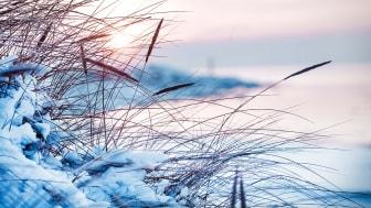 Vinter2_Tylosand_FotoPamela.se.jpg