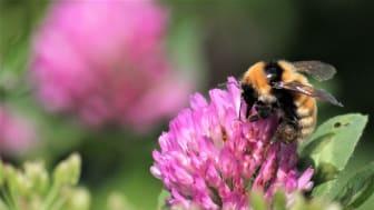 Med många blommor i åkerkanter och dikesrenar trivs pollinerande insekter, vilda djur, växter och bär ännu bättre. Det är nödvändigt för att vi ska kunna bromsa effekterna av klimatkrisen, säger Anna-Karin Karlsson, Norrmejeriers hållbarhetsdirektör.